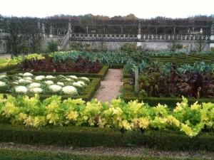 Golden celery, snow ball cauliflower, bulls blood beets, and leeks paint a beautiful garden.